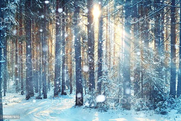 Photo of blurred background forest snow winter