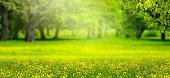 blurred background in idyllic park landscape