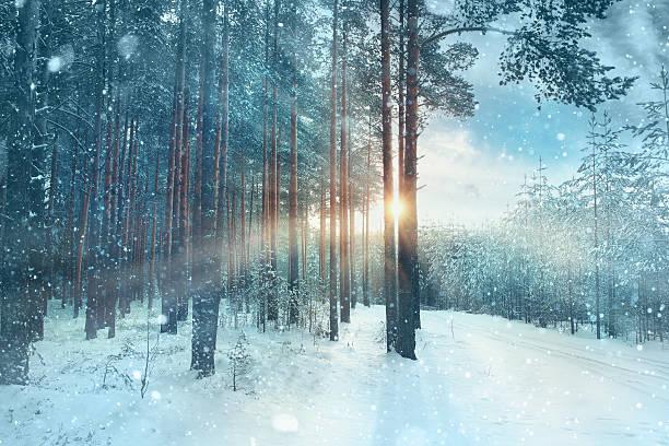 Borrosa fondo nívea forest nature park - foto de stock