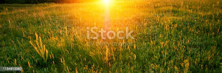 istock Blurred background, sunbeam of light in the early morning in the meadow. 1134910062