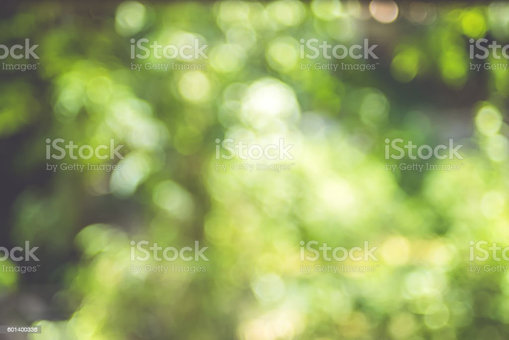 Blurred background, Tree Abstract Green bokeh light