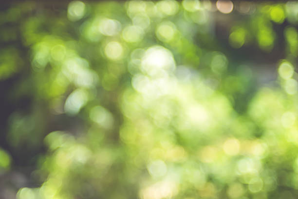 Blurred background, Tree Abstract Green bokeh light stock photo