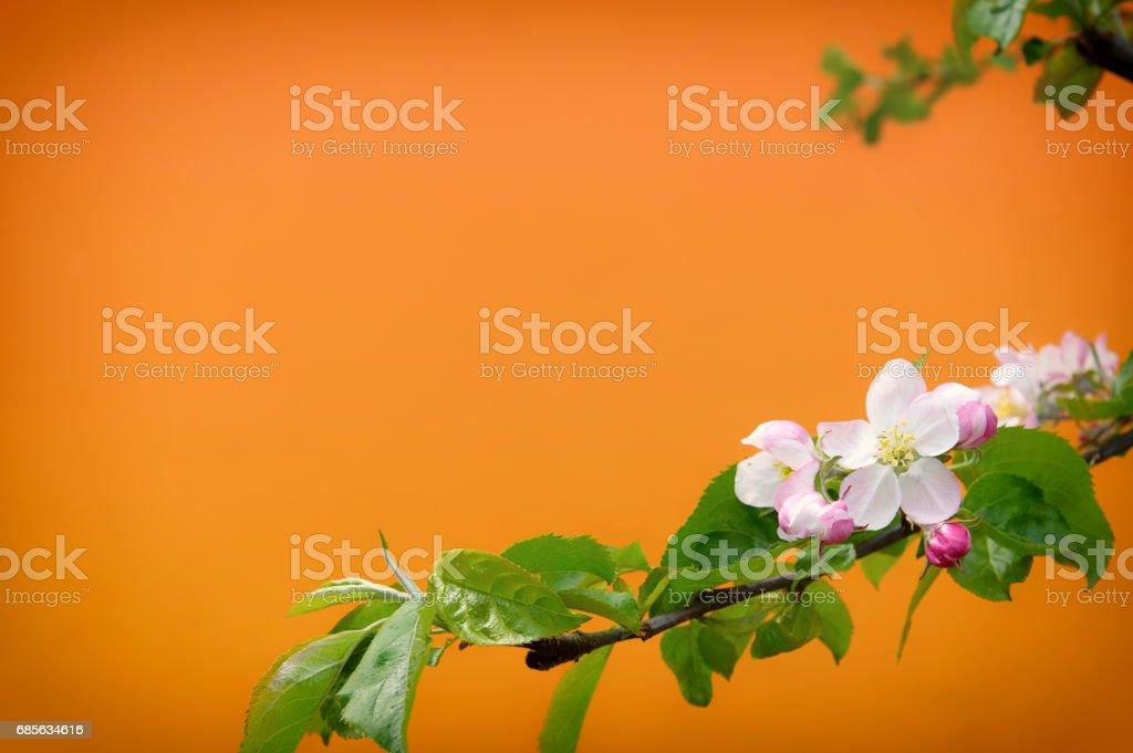오렌지에 봄 꽃으로 배경을 흐리게 royalty-free 스톡 사진