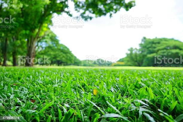 Verschwommene Hintergründe Grünen Rasen Und Bäume Im Green Park Stockfoto und mehr Bilder von Aufnahme von unten