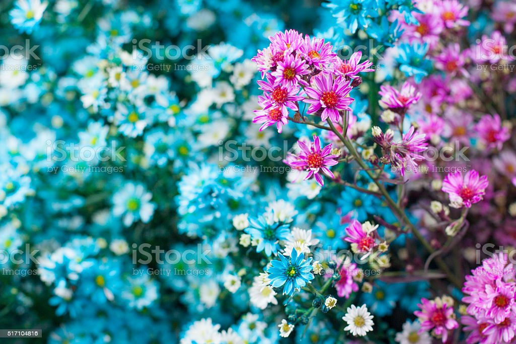 Blurred blue and pink flowers stock photo