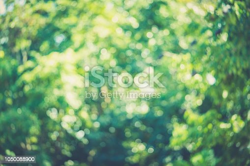 Blurred bokeh abstract green nature background for photo background