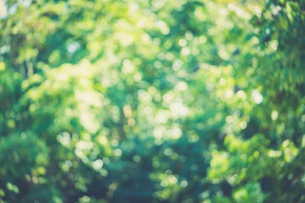verschwommene bokeh grün abstrakt hintergrund für fotohintergrund - glitter farbige wände stock-fotos und bilder