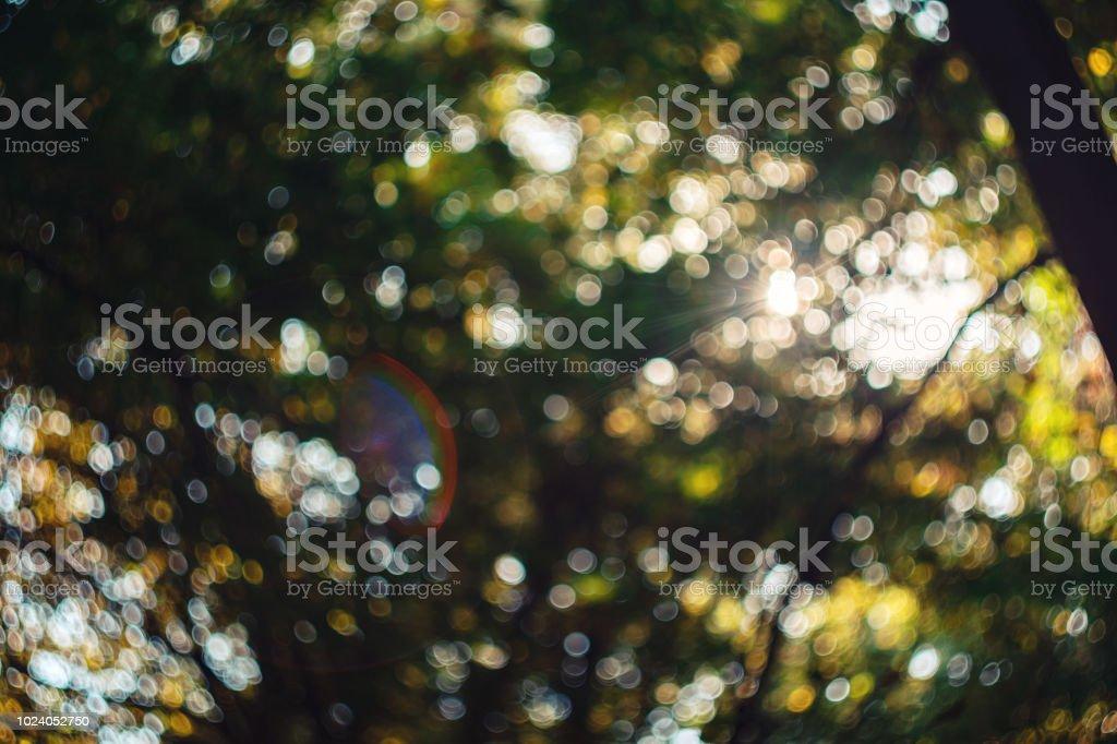 Fundo desfocado do Bokeh da floresta contra céu tirada com Helios 44 2/58 - foto de acervo