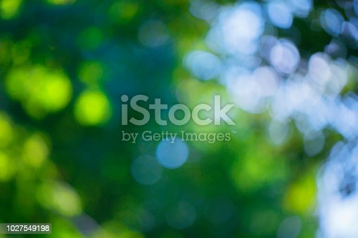 Blurred bokeh effect on a background of green tree leaves and a blue sky on a sunny day