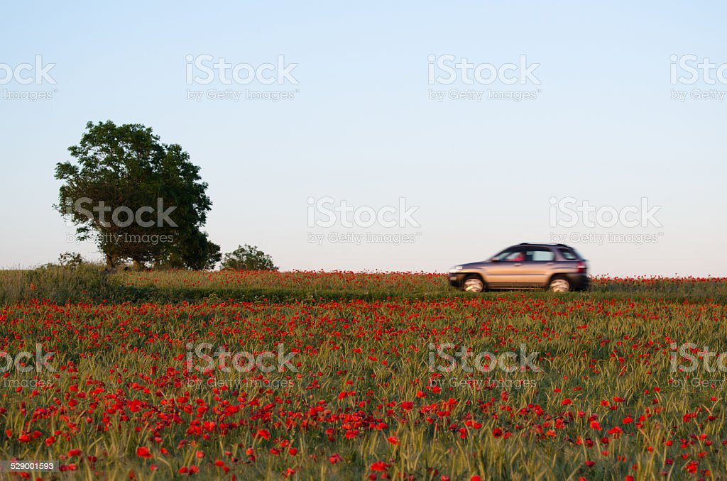 Blurred car in a red summer landscape stock photo