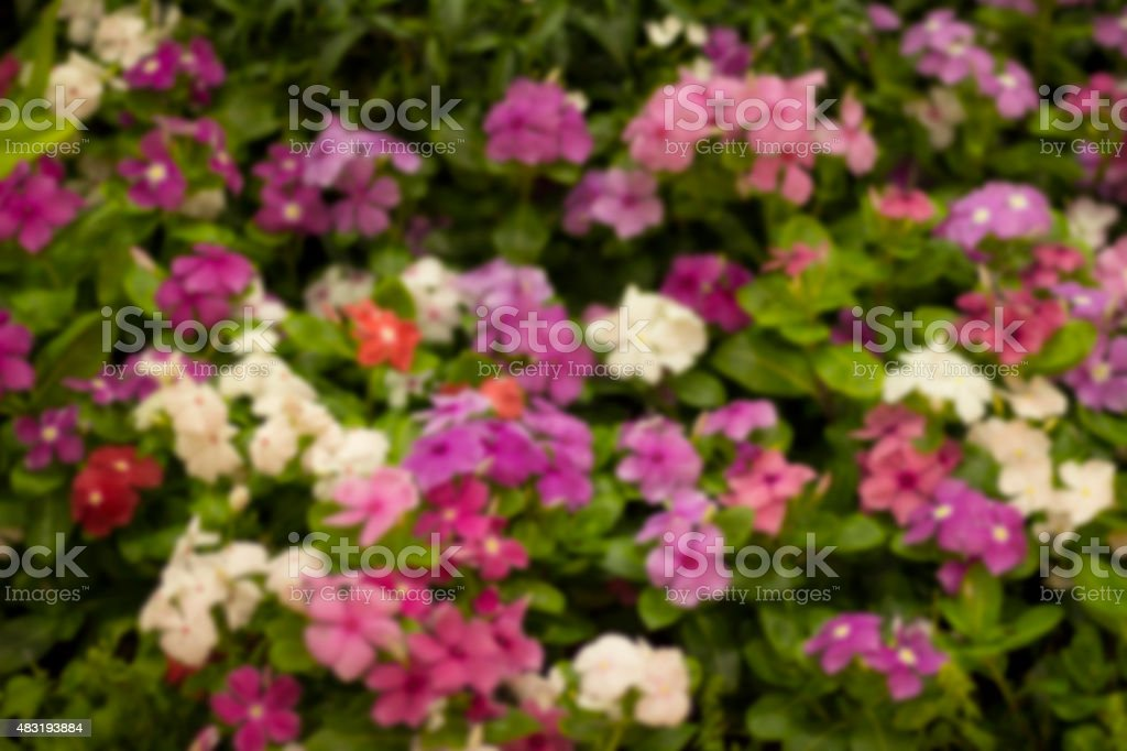 Blurred colorful flowers stock photo