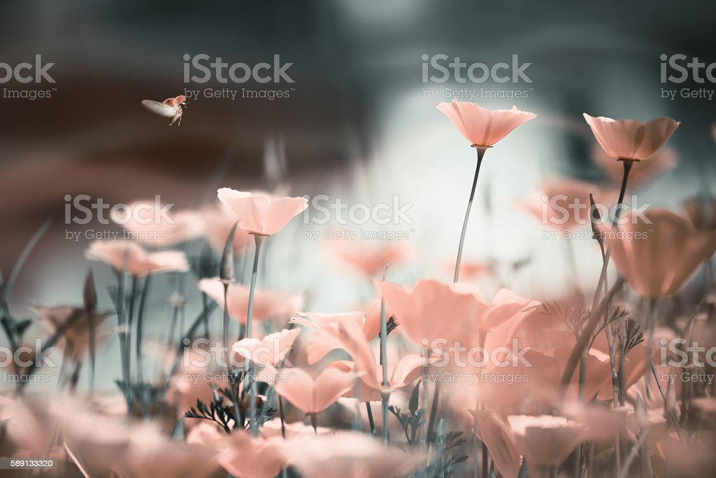 Blurred floral background in grunge style with poppies. stock photo