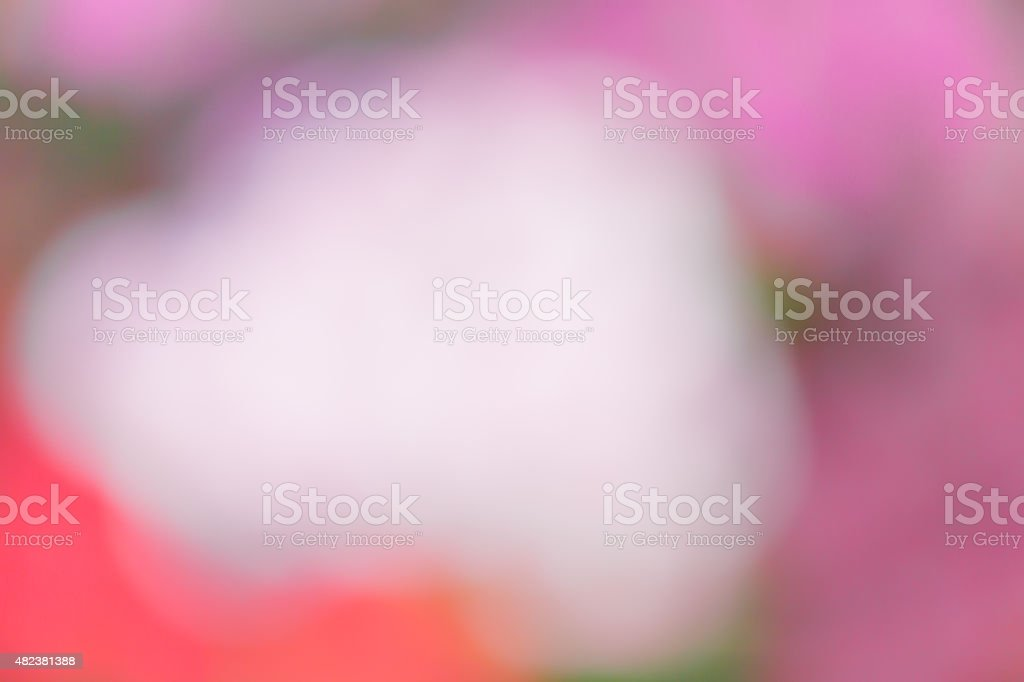 blurred flower background stock photo