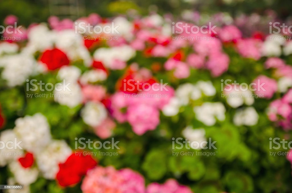 blurred flower background royalty-free stock photo