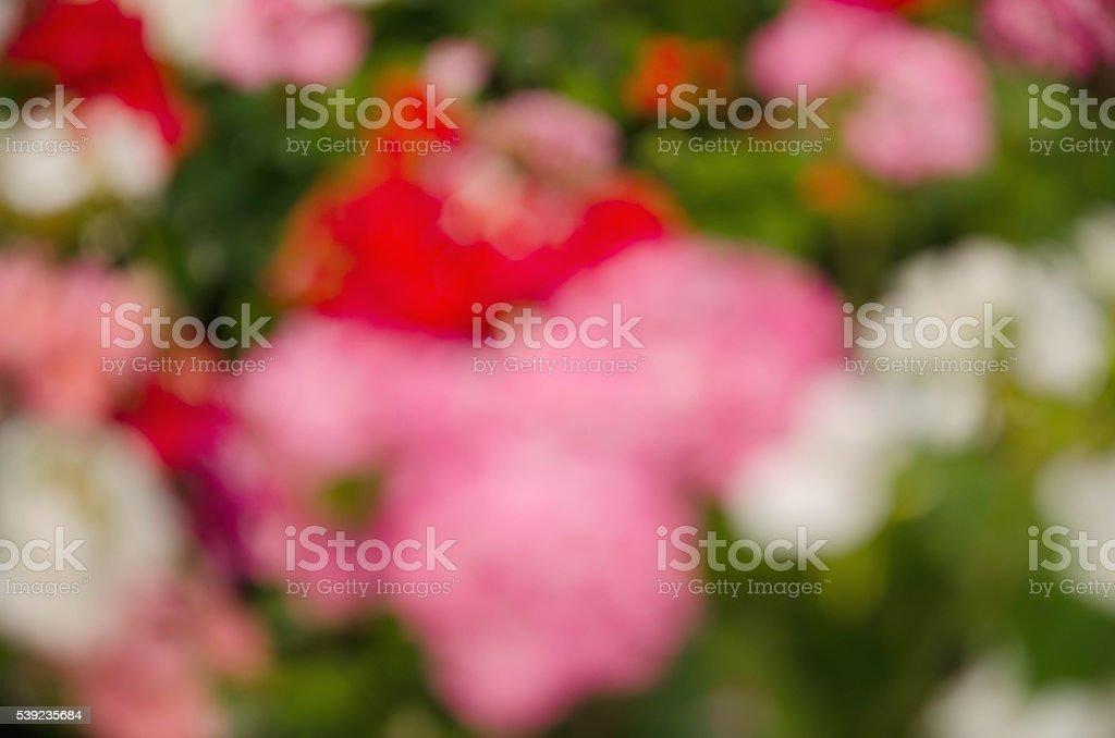 Borrosa fondo de flores foto de stock libre de derechos
