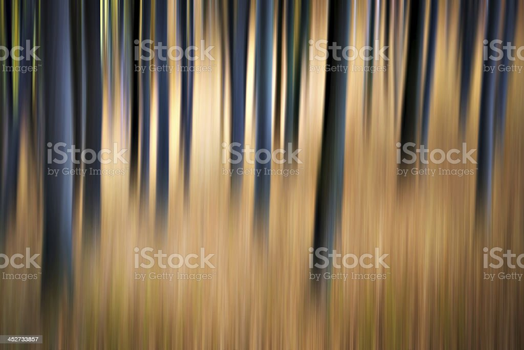 Blurred Forest stock photo
