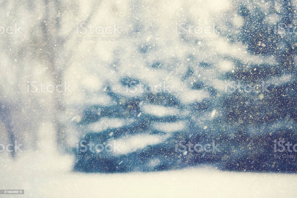 Blurred Forest Through A Snowstorm stock photo