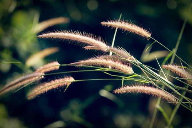 Verschwommenes Gras mit Blumen – Foto