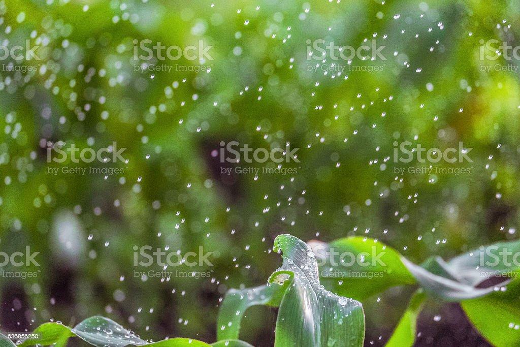 Blurred green background irrigation stock photo