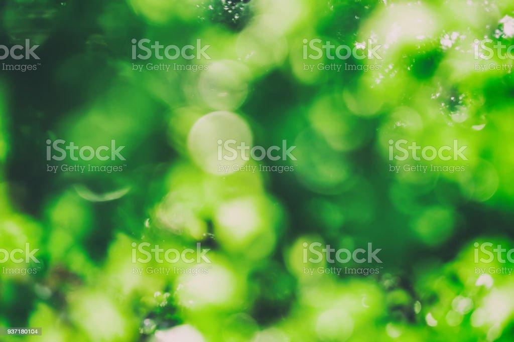Verschwommene grünem Hintergrund – Foto