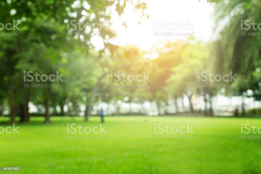 blurred green garden on summer stock photo