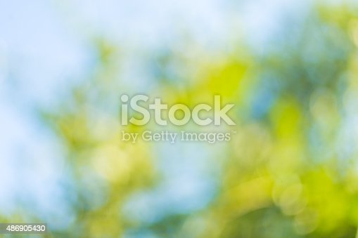 513690180 istock photo Blurred leaves on the tree 486905430