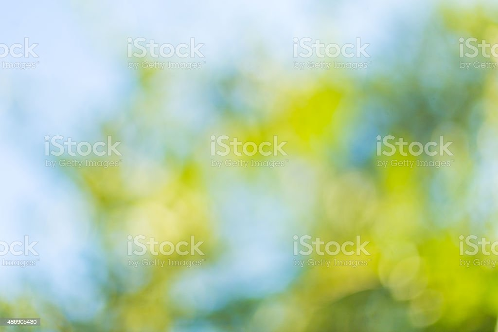 Blurred leaves on the tree stock photo