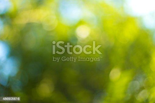 513690180 istock photo Blurred leaves on the tree 486905616