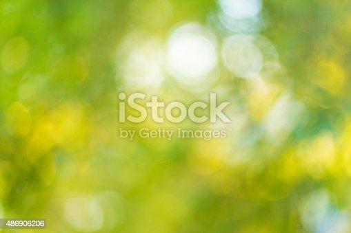 513690180 istock photo Blurred leaves on the tree 486906206