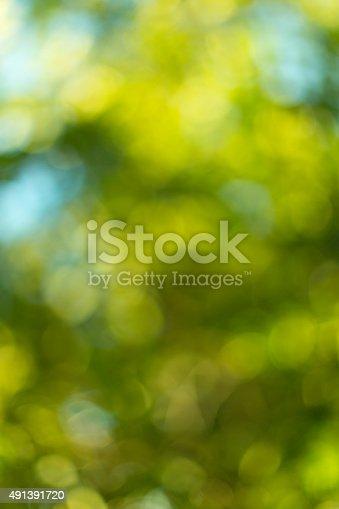 513690180 istock photo Blurred leaves on the tree 491391720