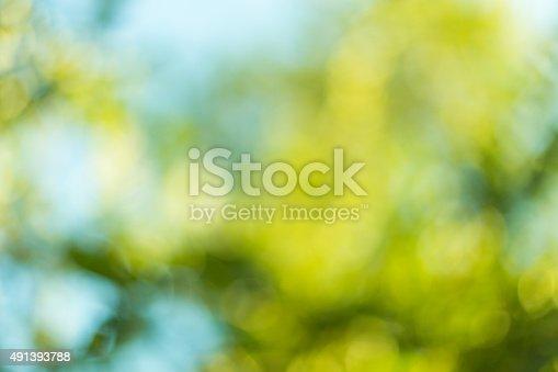 513690180 istock photo Blurred leaves on the tree 491393788