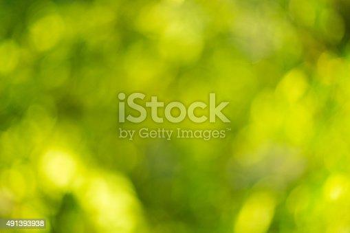 513690180 istock photo Blurred leaves on the tree 491393938
