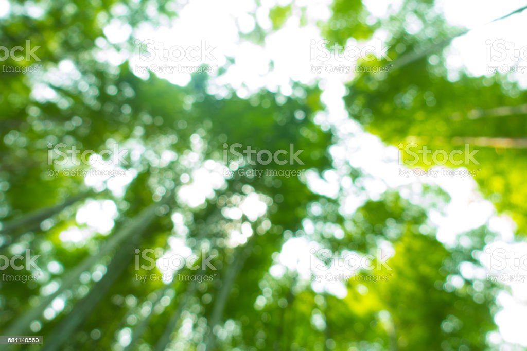 Blurred leaves foto stock royalty-free