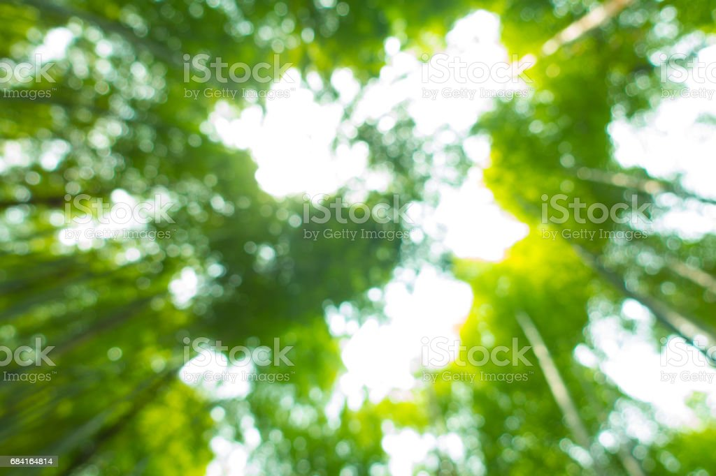 Blurred leaves royalty-free stock photo