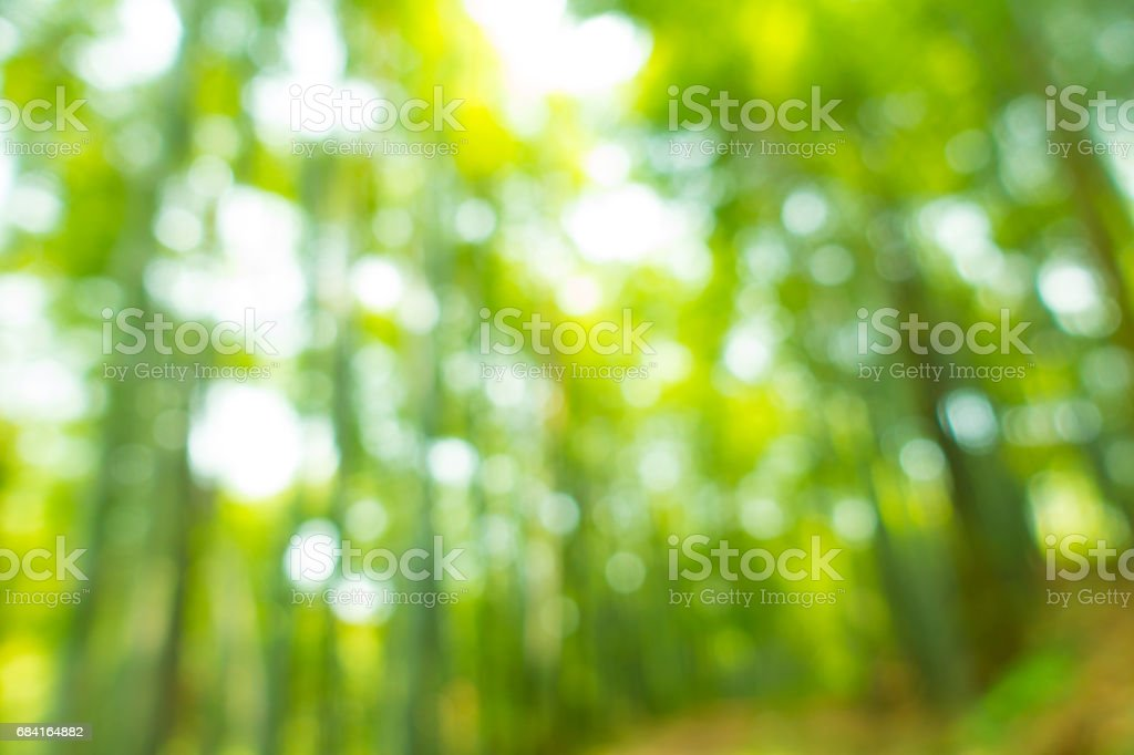Blurred leaves zbiór zdjęć royalty-free