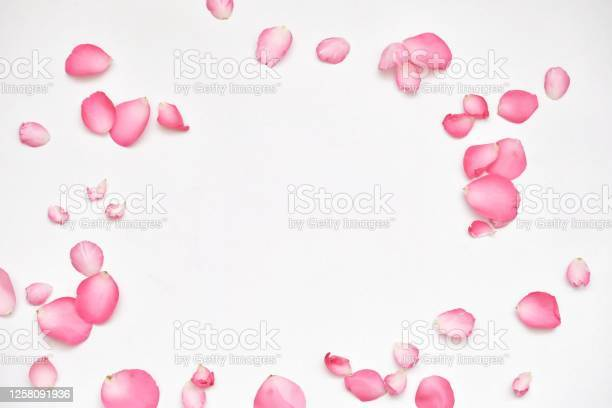 Blurred many sweet pink rose corollas on white background with softly picture id1258091936?b=1&k=6&m=1258091936&s=612x612&h=ntwafrukrrnnxug0tlfeo4epipu qn5mj3xji qxbkq=