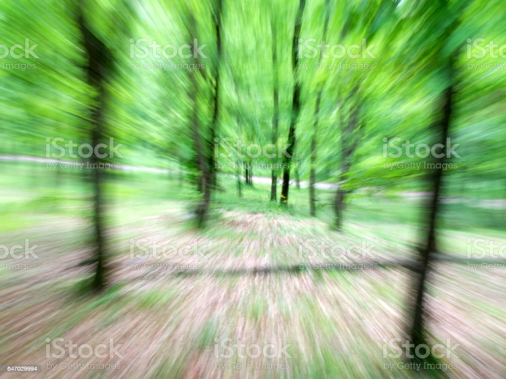 Blurred motion in the forest. stock photo