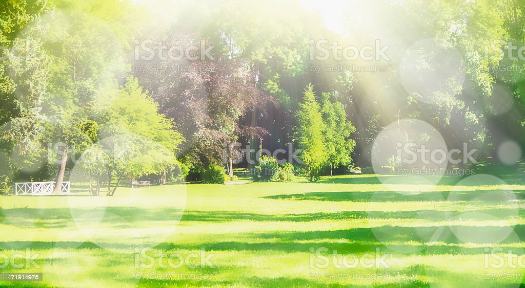 Blurred nature park background with sun rays and bokeh, banner stock photo