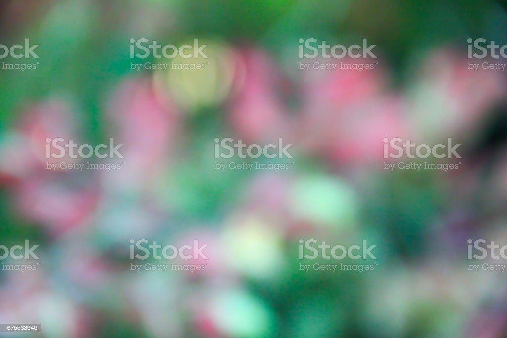 Blurred of beautiful flower photo libre de droits
