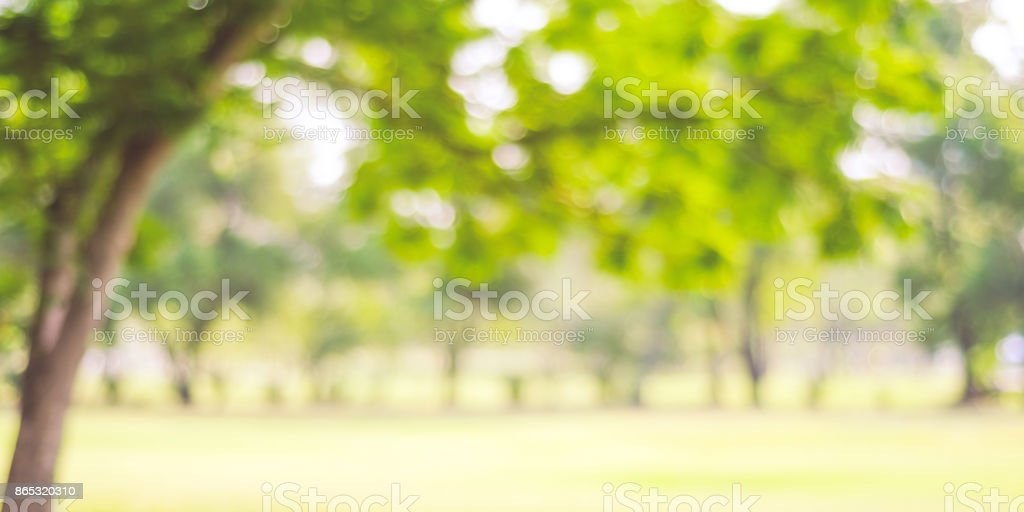 Blurred park with bokeh light, nature background, banner, fall, autumn season stock photo