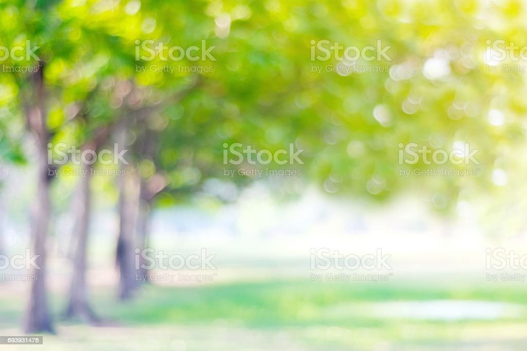 Blurred park with bokeh light, nature background, spring and summer season stock photo