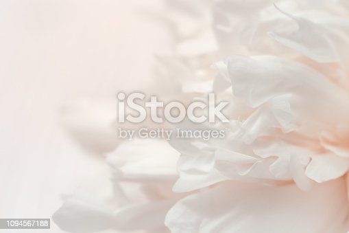 Blurred peony petals, abstract romance background, pastel cream colors and soft flower card