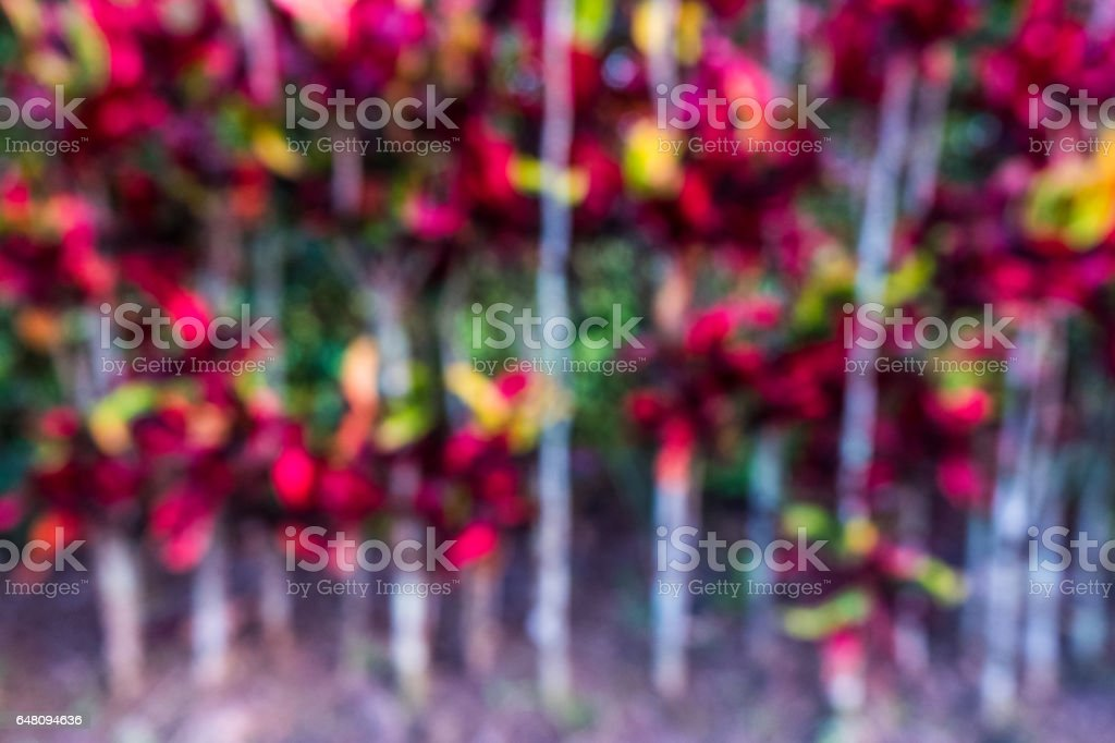 Blurred red leaves tree background. stock photo