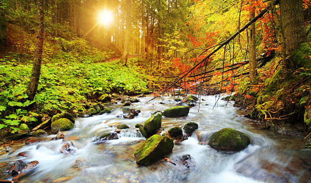 Blurred Stream Flowing Through the Woods During Fall stock photo