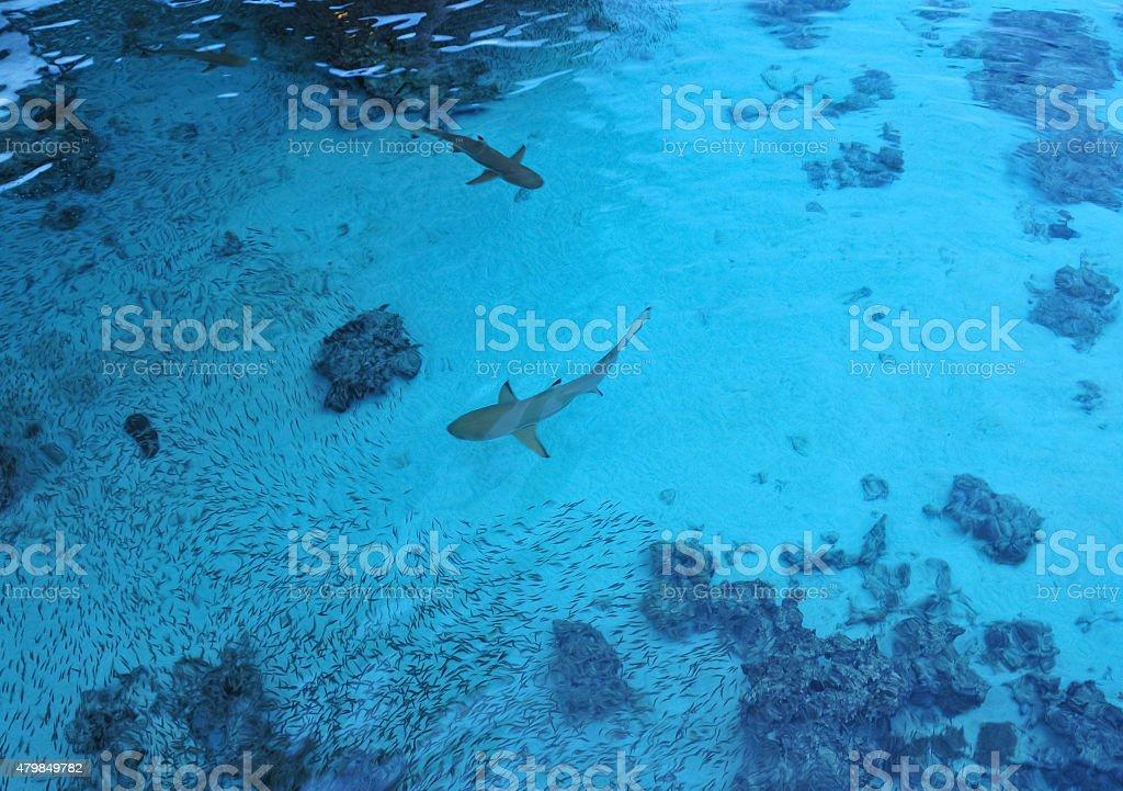 Fotografía De Bajo El Agua En Movimiento Borroso Imagen De Tiburones