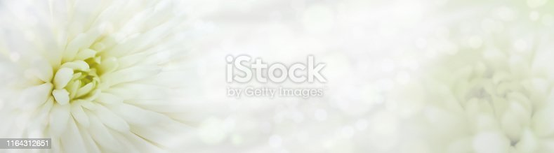 istock Blurred white aster with bokeh. Floral natural banner. Light cute background for creative design. Close up view, macro, soft focus, copy space. Panoramic landscape. Delicate, elegant, dainty, romantic, gentle, airy collage 1164312651