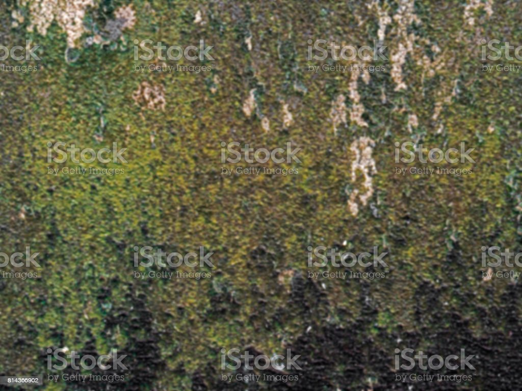 Blurry Background of Dirty Lichens on Wall stock photo
