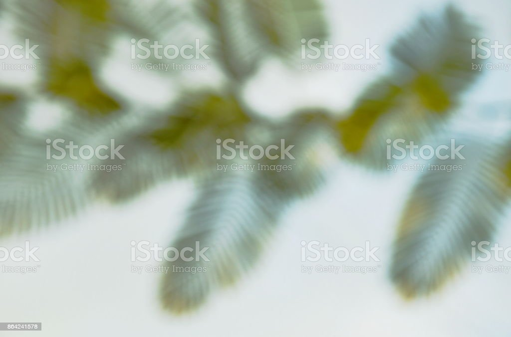 blurry compound leaf background and texture royalty-free stock photo