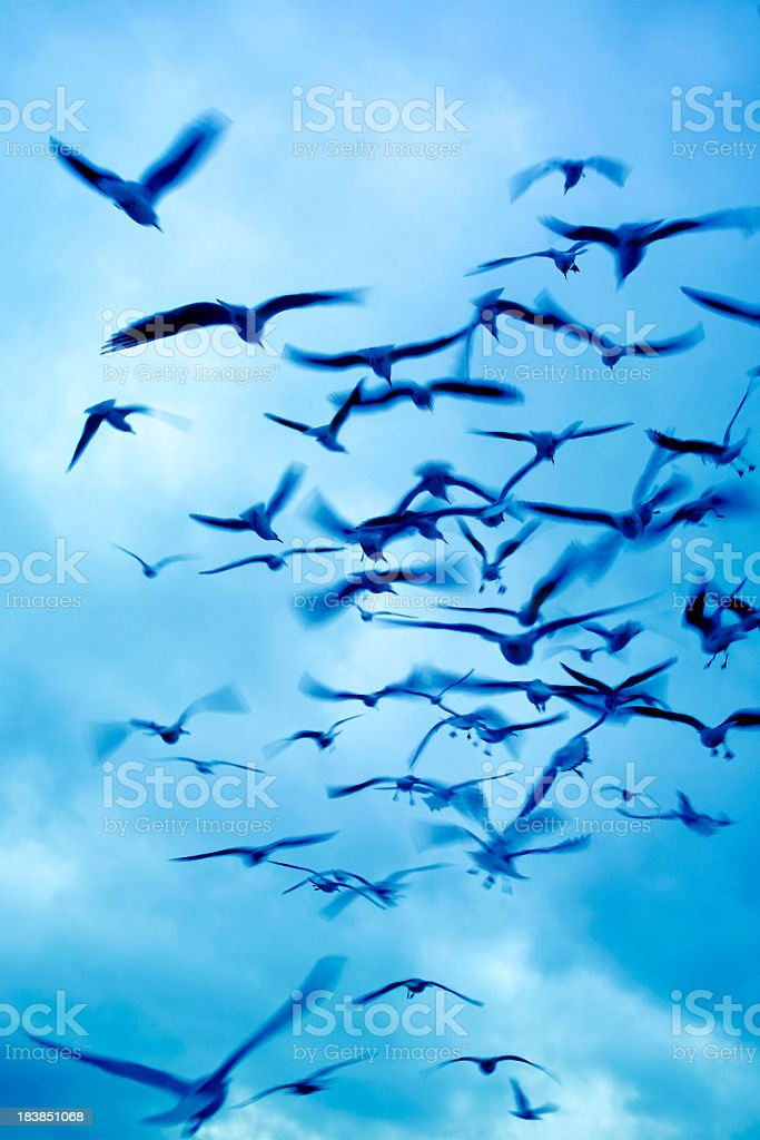 blurry flying group of birds stock photo