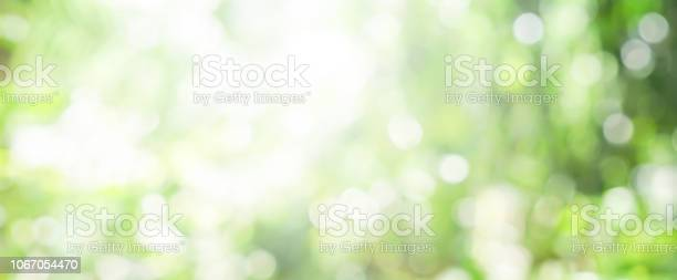 Photo of blurry green nature forest landscape background with sunlight flare:blurred bokeh natural backdrop